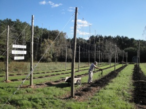 New Sign, John, Cover Crop and Mulch